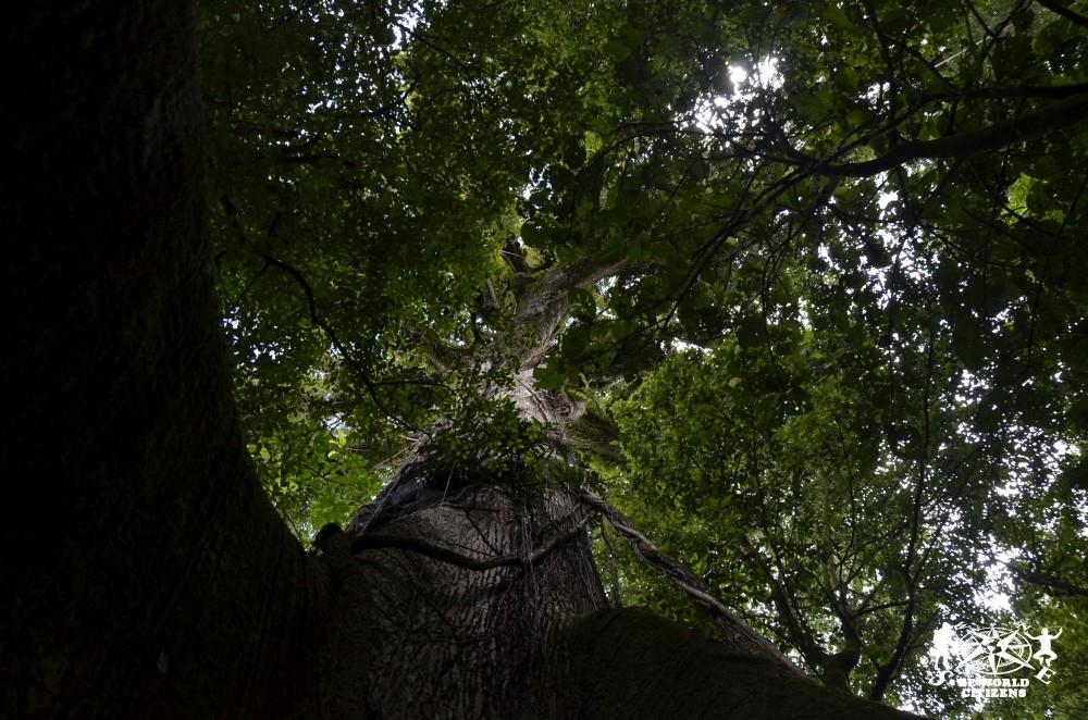 14-11-13a23 Costa Rica (169)