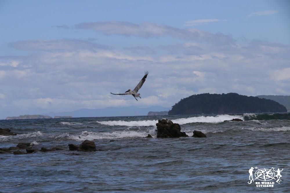 14-11-13a23 Costa Rica (398)