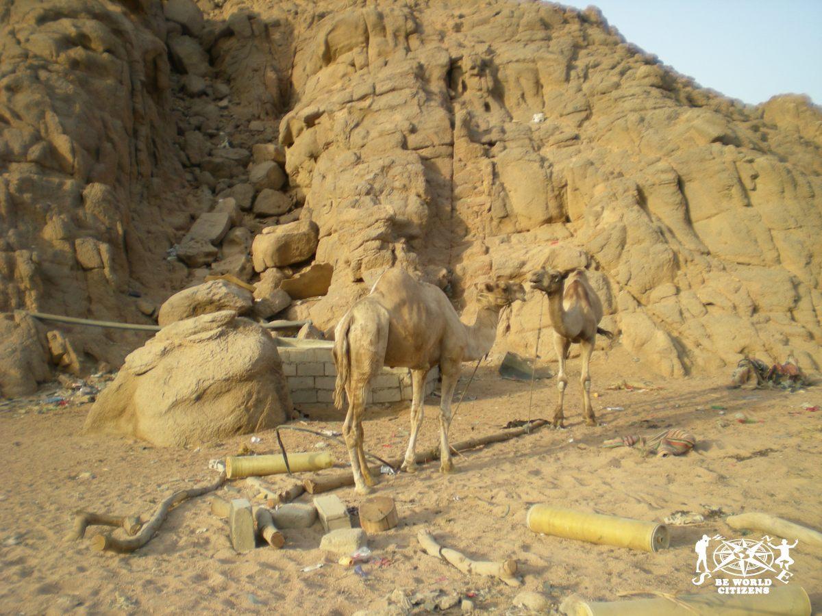 2011.08.03-Motorata Su Quod Nel Deserto Del Sinai(23)