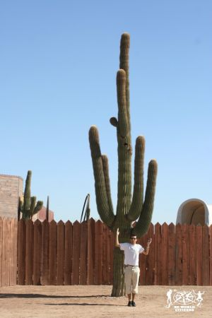Galleria/Gallery: Arizona