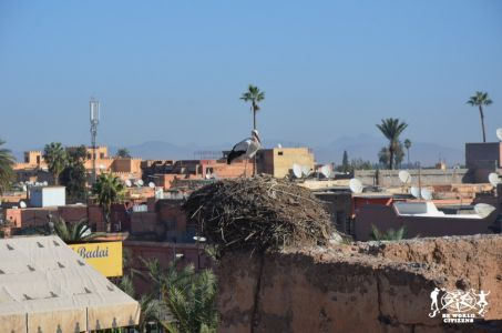 Galleria/Gallery: Marrakech & Surroundings