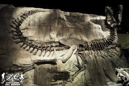 Galleria Canada: Royal Tyrrel Museum
