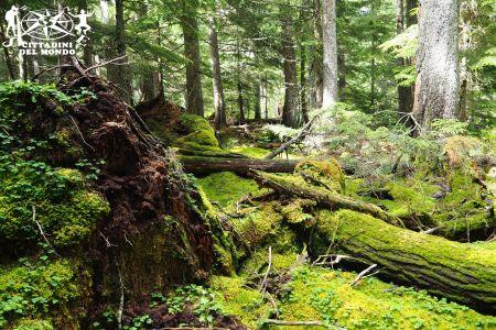 Galleria Canada: Emerald Basin