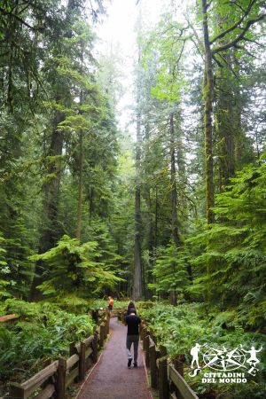 Galleria Canada: Vancouver Island - Cathedral Grove