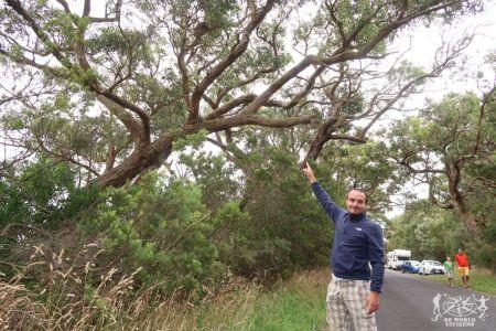 Australia: Cape Oatway
