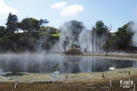 New Zealand: Rotorua