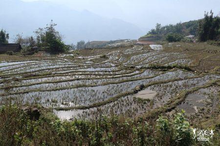 Vietnam: tra le risaie di Sapa