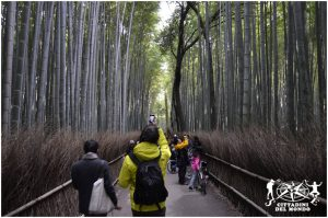 Giappone corridoio alberi