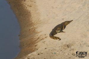 14.07.27-29-Safari Kruger(167).2
