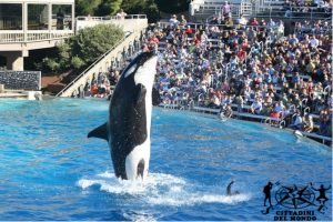 San Diego - Sea World
