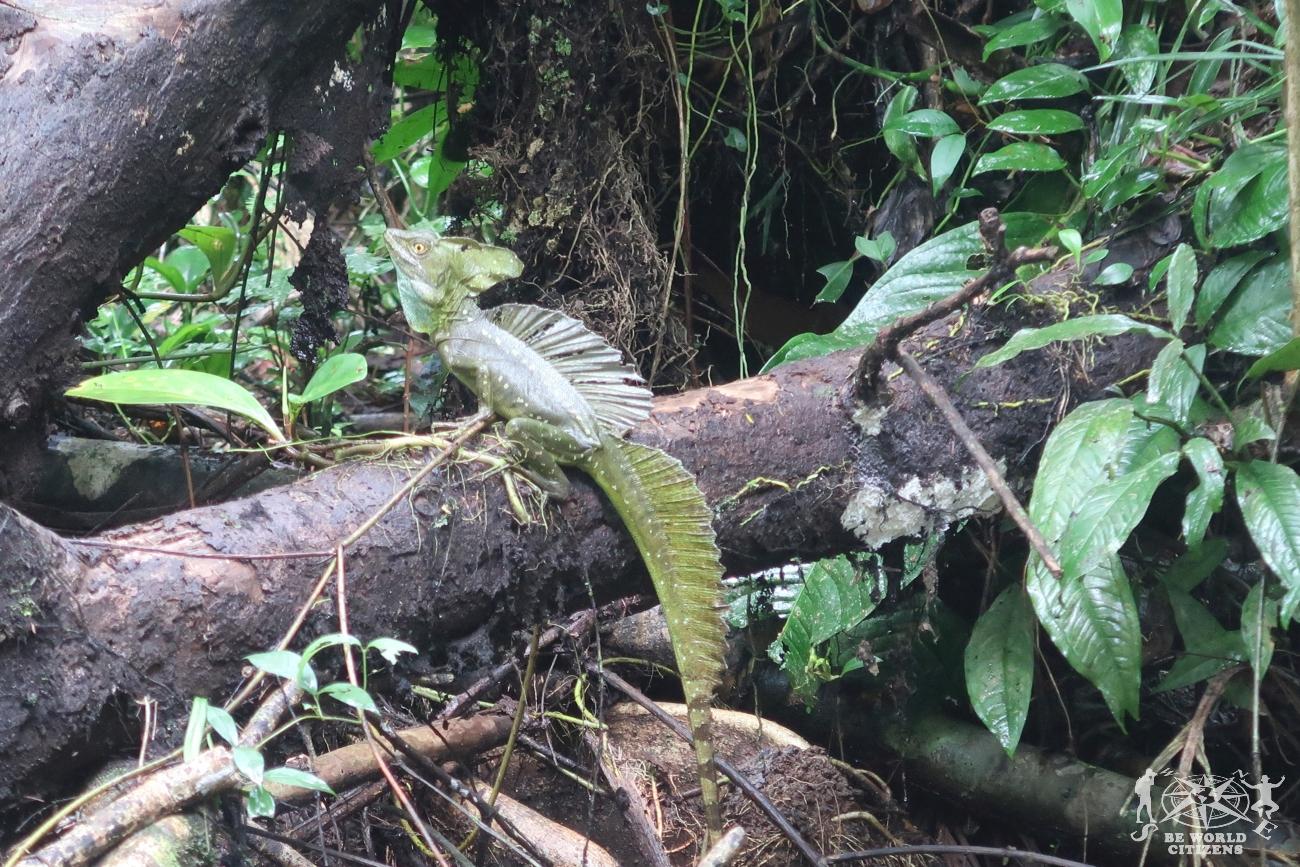 Costa Rica: Tortuguero