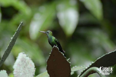 14-11-13a23 Costa Rica (219)