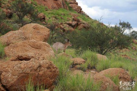 Australia: Outback