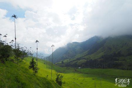 Colombia: Parque del Cocora