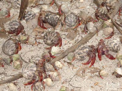 Messico: Isla Contoy