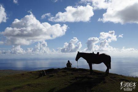 Isola di Pasqua: Tere Vaka