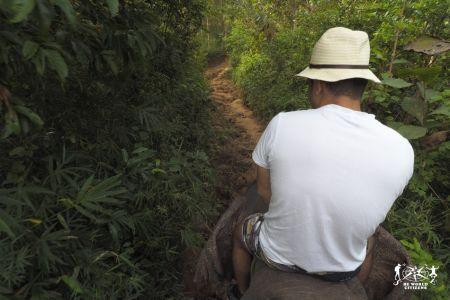 Laos: Luang Prabang - in groppa all'elefante