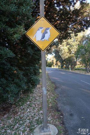 Australia: Phillip Island - Attenzione Pinguini