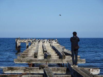 Cile: Punta Arenas