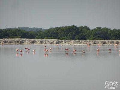 Messico: Rio Lagartos