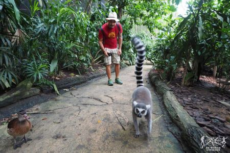 Singapore: Singapore Zoo