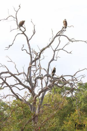 Sud Africa: Kruger